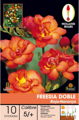 070555BOLS Foto: 070555 FREESIA DOBLE